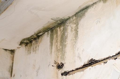 istock Water damage on fungus mold weathered wall 885625816