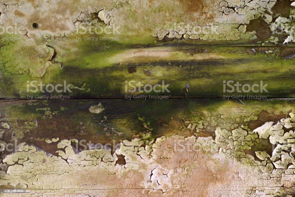The close-up of green algae, peeling paint and worn traces of water...