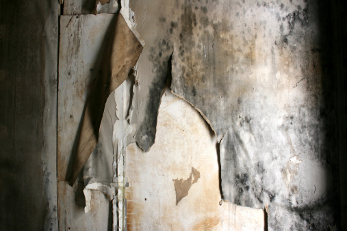 Water damaged moldy wall paper