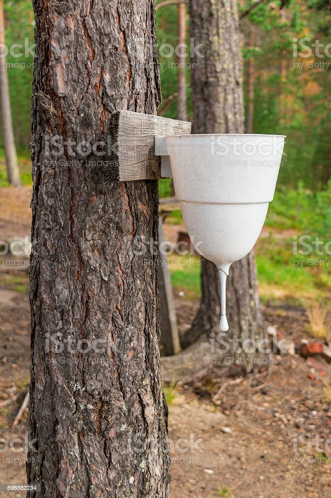 Water dispenser on tree royalty-free stock photo