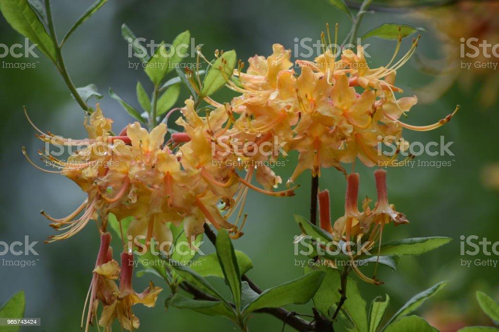 water doorweekt gele bloemen - Royalty-free Blad Stockfoto