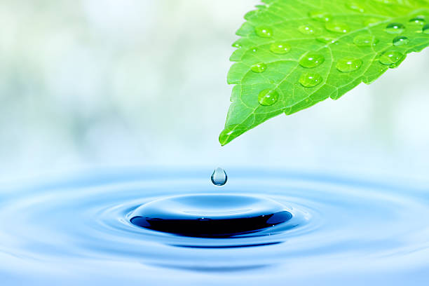 Water dripping from a green leaf stock photo