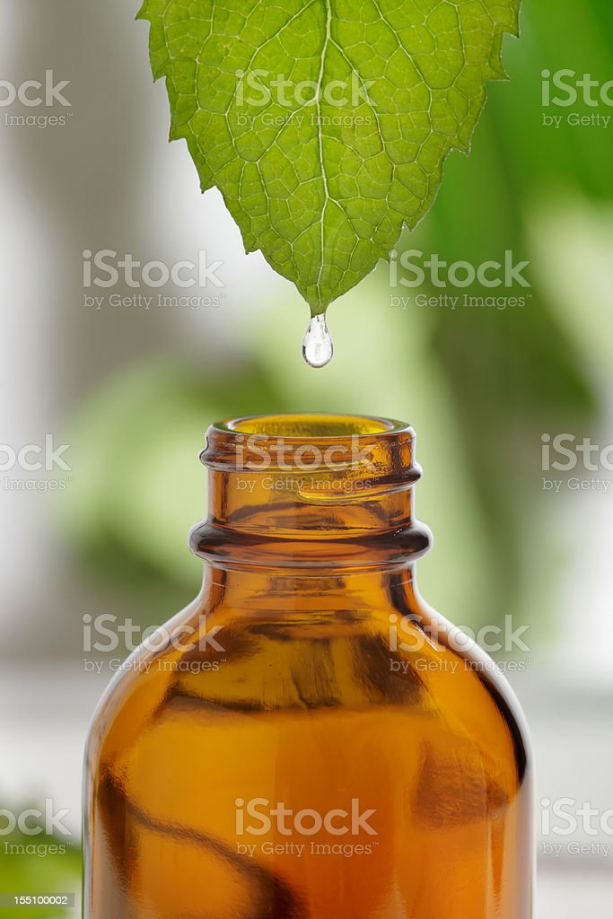 Water dripping from leaf into brown, glass bottle stock photo
