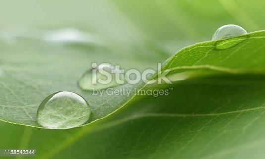 Water drop extreme closed up on green tree leaf