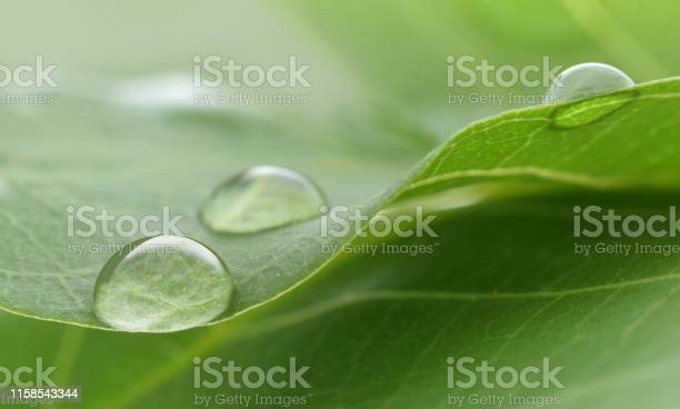 Photo of Water drop closed up on green leaf