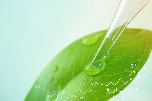 water drop from leaf and laboratory for natural chemistry concept – Foto
