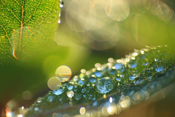 Water drop on a leaf - ultra shallow DOF stock photo