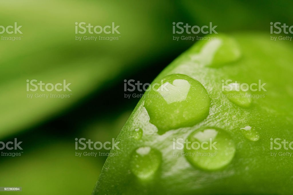 Water drop on a leaf with defocused background royalty-free stock photo