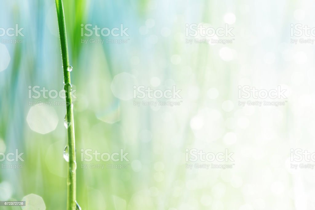Water drop on a stalk of gras