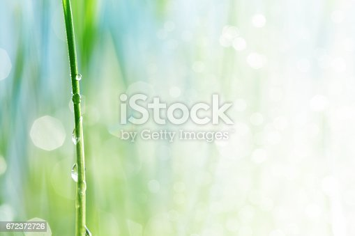 672372726 istock photo Water drop on a stalk of gras 672372726