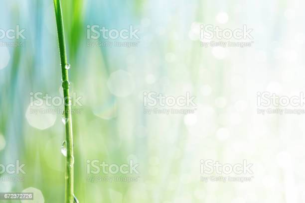 Photo of Water drop on a stalk of gras
