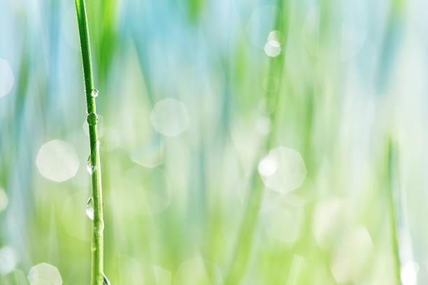 um água cai sobre um talo de grasswater - foto de acervo