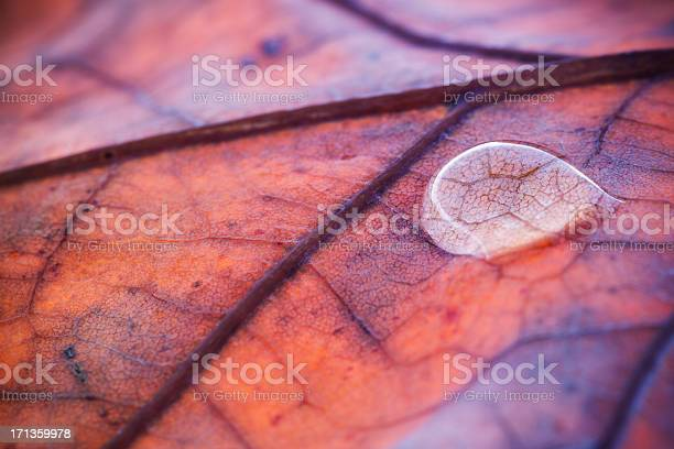 Photo of Water Drop On Autumn Leaf