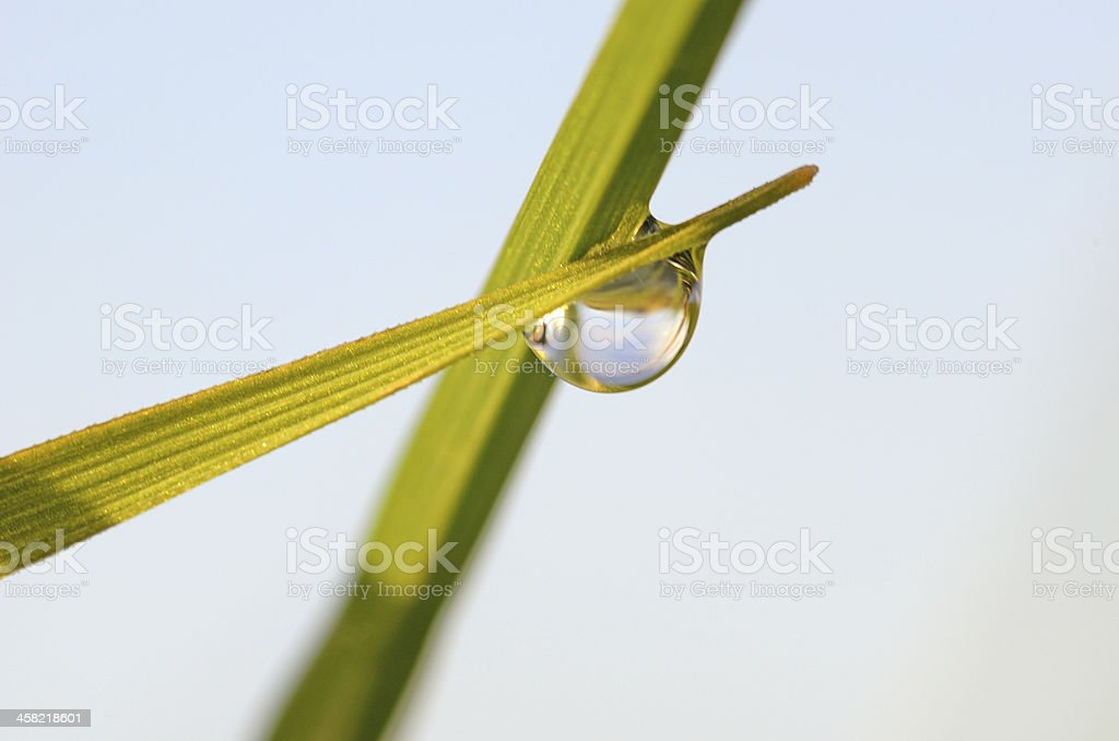 Water drop on blade of grass royalty-free stock photo