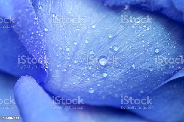 Photo of Water drop on blue petals.