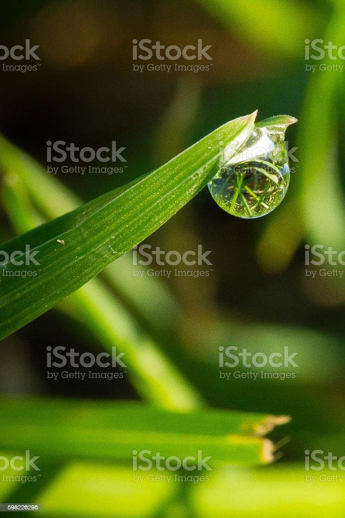 A água cai sobre grama foto royalty-free