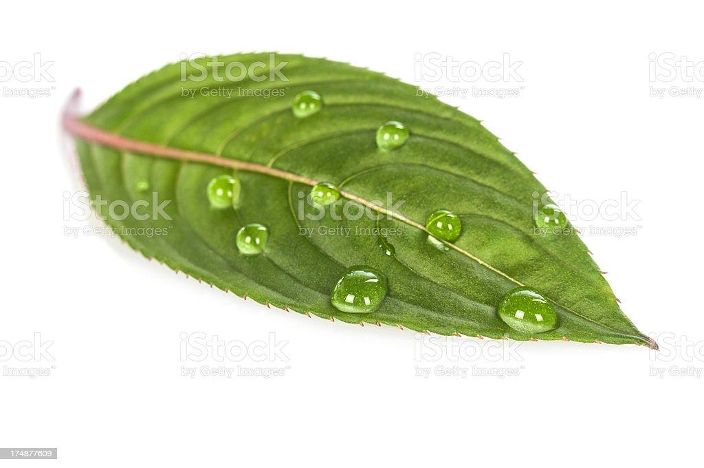 Gouttes d'eau sur Feuille verte - Photo