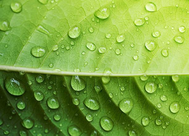 Water drop on green leaf stock photo