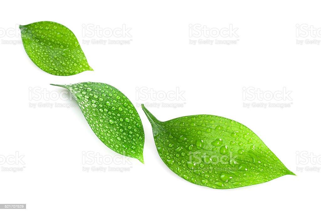 Wasser Tropfen auf grüne Blätter – Foto