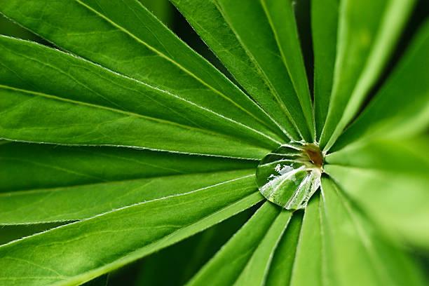 Gota de agua en verde de la planta - foto de stock