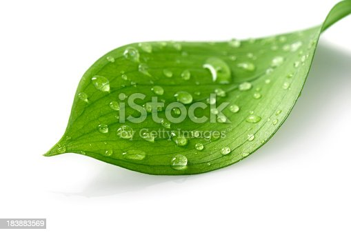 Water Drop on Leaf Isolated on White