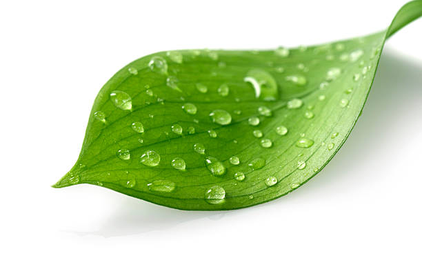 Water Drop on Leaf - foto de stock