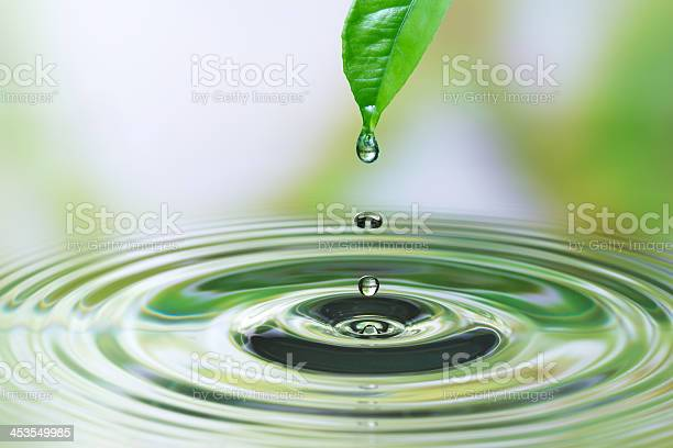Photo of Water drop on leaf
