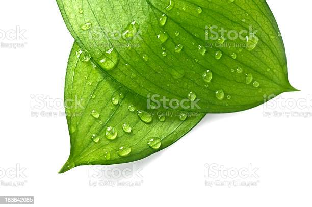 Photo of Water Drop on Leaves
