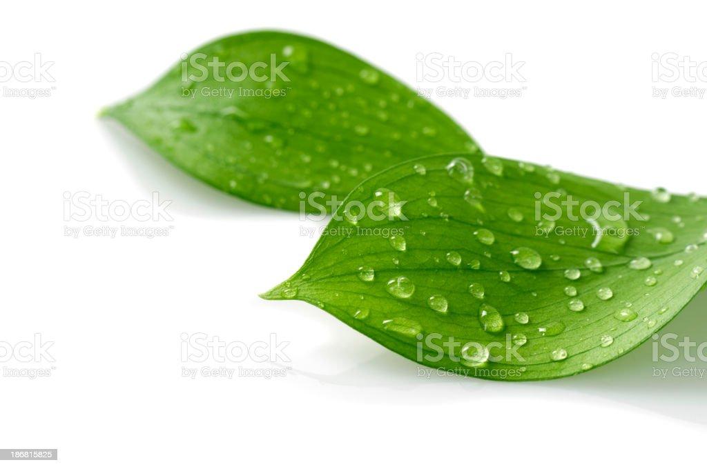 Wasser Tropfen auf Blätter – Foto