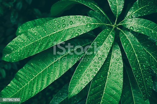 water drop on dark green leaf, top view