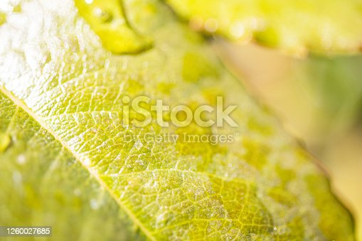 876018792 istock photo Water Drop On The Leaf And Nature Background With Beautiful Green Bokeh Circles 1260027685