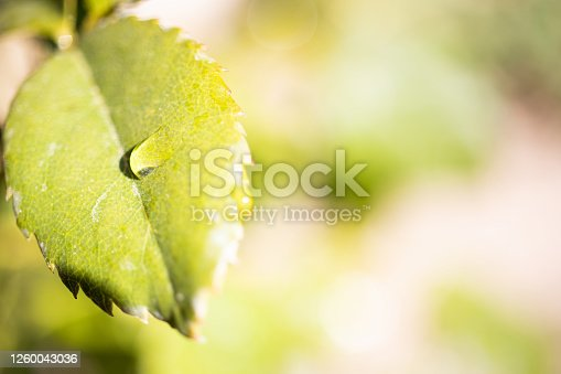 672372726 istock photo Water Drop On The Leaf And Nature Background With Beautiful Green Bokeh Circles 1260043036