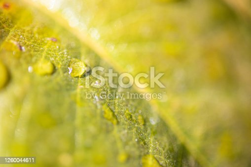 876018792 istock photo Water Drop On The Leaf And Nature Background With Beautiful Green Bokeh Circles 1260044611