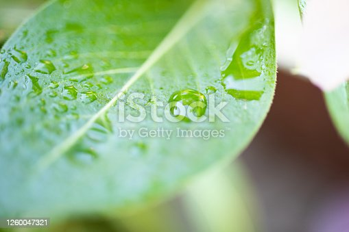 876018792 istock photo Water Drop On The Leaf And Nature Background With Beautiful Green Bokeh Circles 1260047321