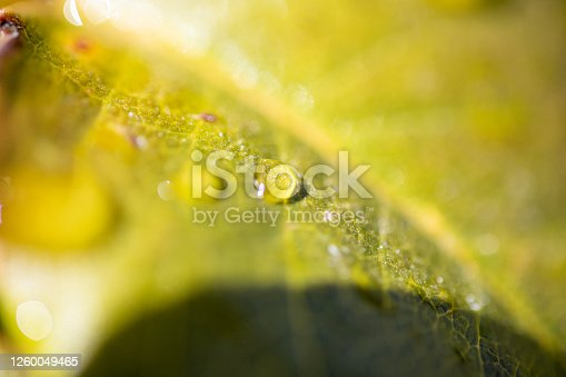 672372726 istock photo Water Drop On The Leaf And Nature Background With Beautiful Green Bokeh Circles 1260049465