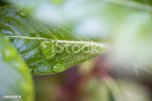 672372726 istock photo Water Drop On The Leaf And Nature Background With Beautiful Green Bokeh Circles 1260052618