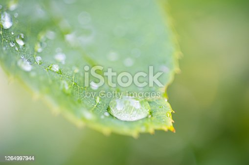 672372726 istock photo Water Drop On The Leaf And Nature Background With Beautiful Green Bokeh Circles 1264997944