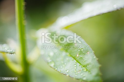 672372726 istock photo Water Drop On The Leaf And Nature Background With Beautiful Green Bokeh Circles 1265001610