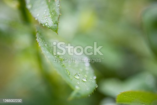 672372726 istock photo Water Drop On The Leaf And Nature Background With Beautiful Green Bokeh Circles 1265002232