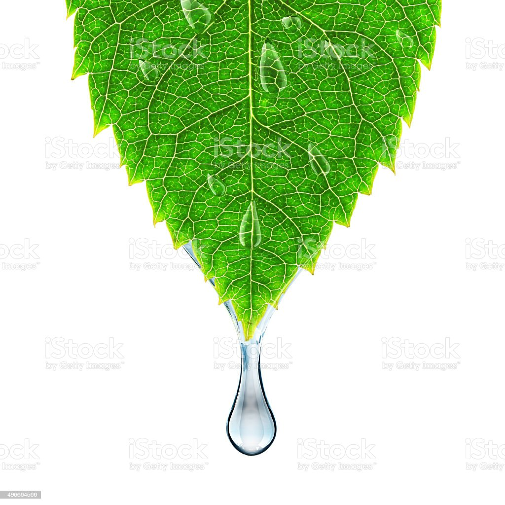 Water Drop On The Leaf Stock Photo & More Pictures Of 2015