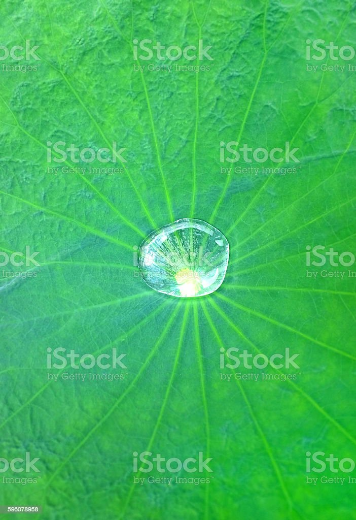 Water drop on the Lotus leaf royalty-free stock photo