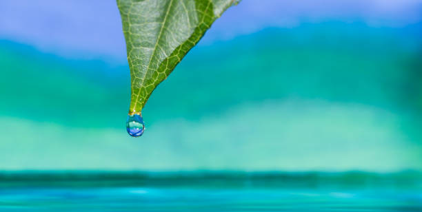 water drop on the tip of a leaf - perdita di peso foto e immagini stock