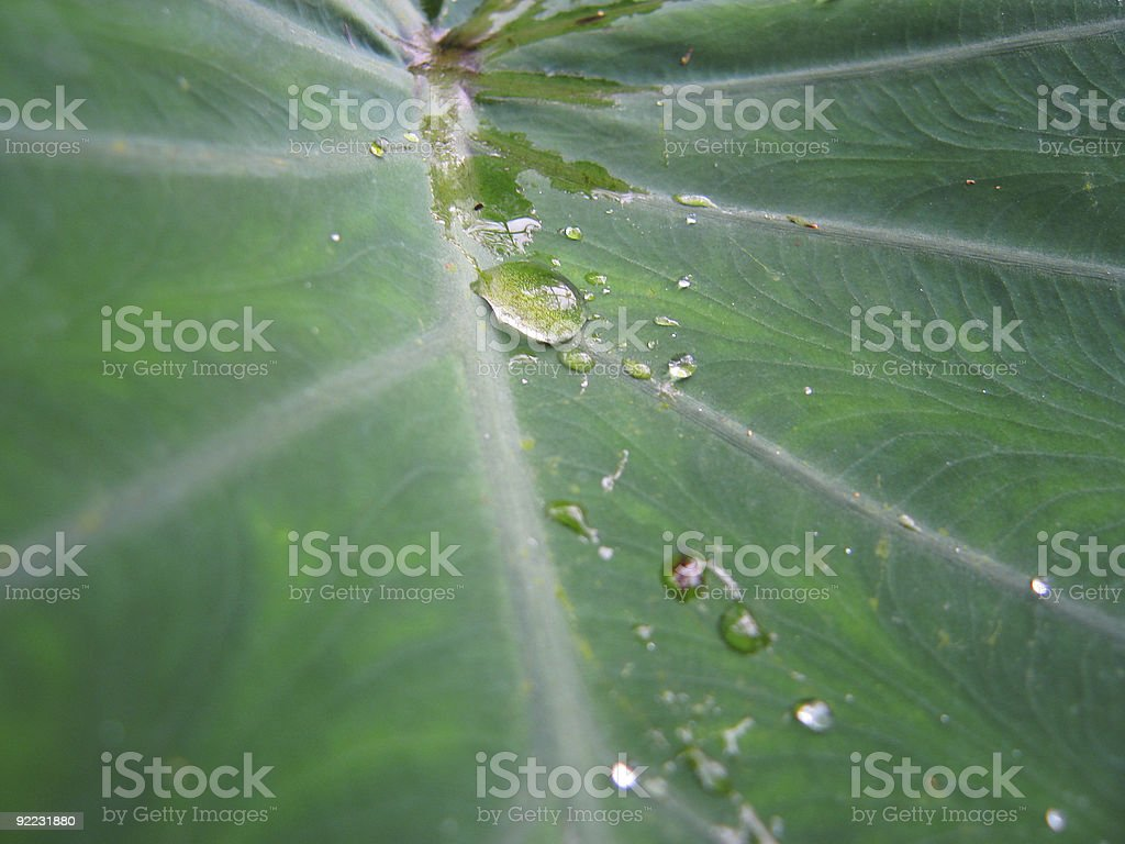 Water drop on tropical leaf​​​ foto
