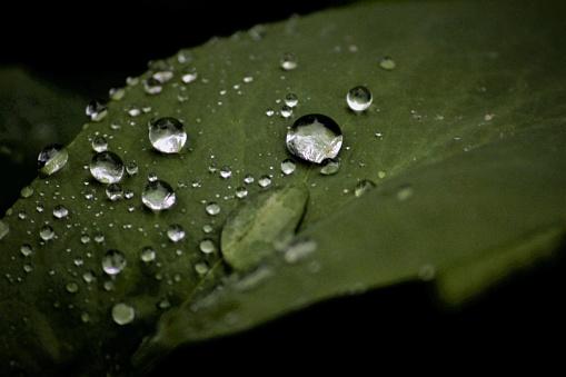 Waterdruppel Stockfoto en meer beelden van Blad