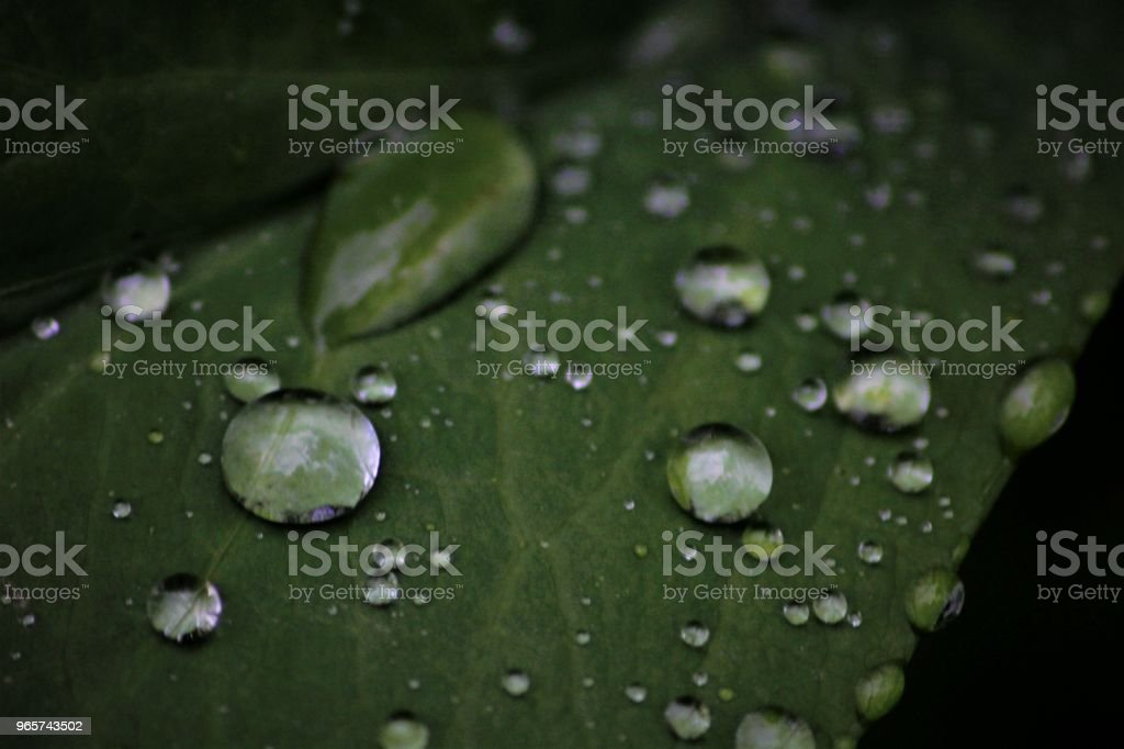 waterdruppel - Royalty-free Blad Stockfoto