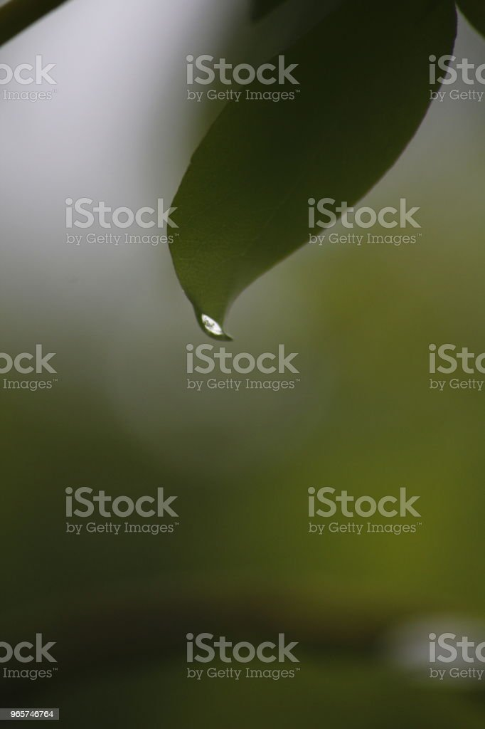 water drop - Royalty-free Beauty In Nature Stock Photo
