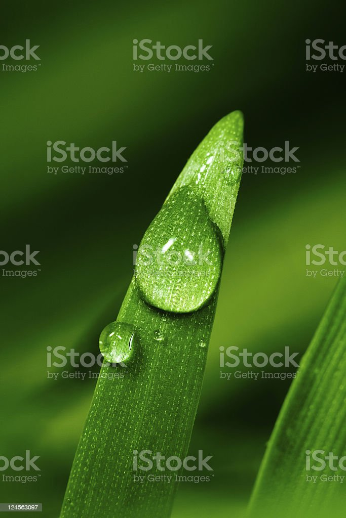 Water droplet on blade of grass stock photo