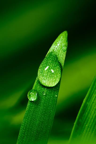 goccia d'acqua sul filo d'erba - filo d'erba foto e immagini stock