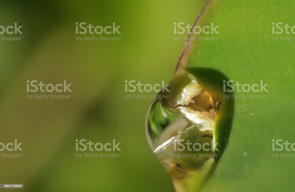 Water droplet on green leaf stock photo