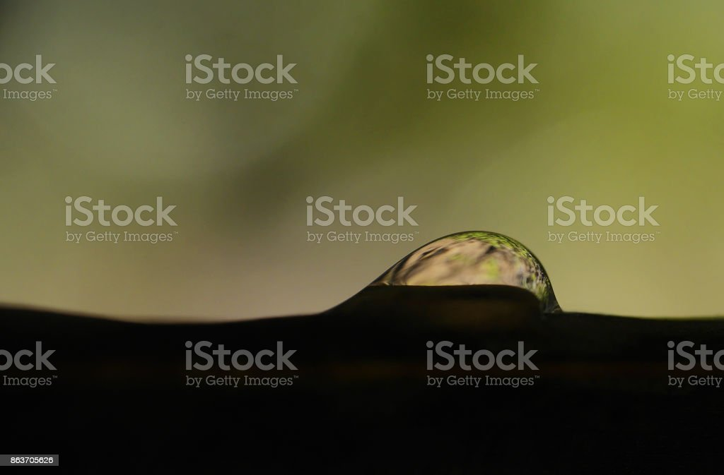 Water droplet on silhouetted leaf stock photo